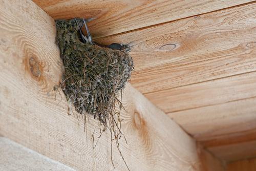 ツバメ 巣作り 警戒