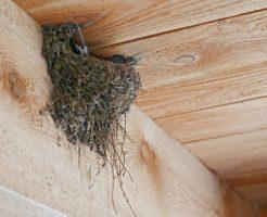 ツバメ 巣作り 子育て つがい