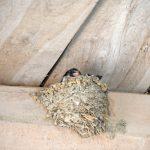 ツバメに巣を作らせない方法