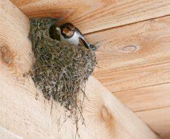 ツバメ 巣作り 寝床